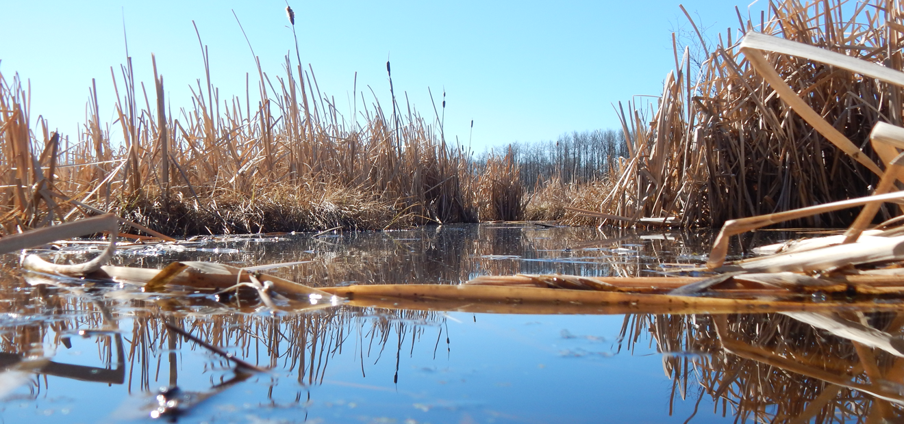 State of Wetland Policy & Regulation