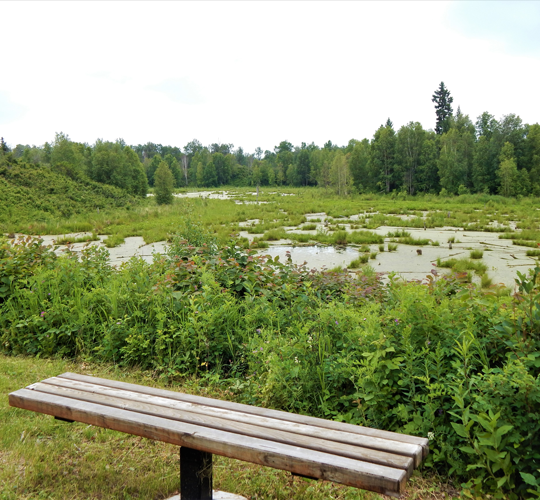 Stroll through boreal forest on the Beaver Hills Biodiversity trail